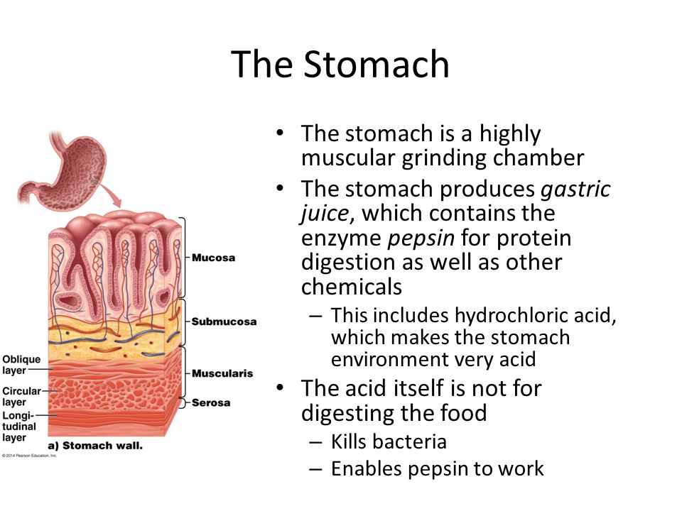 where is gastric juice produced