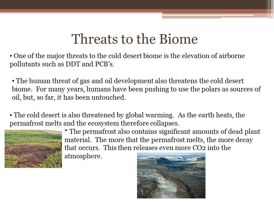 The Tropical Desert Biome Characteristics Of A Tropical Desert The
