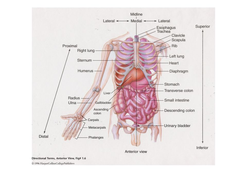 Human Anatomy and Physiology I Chapter 1. Cramming is a sure path to ...
