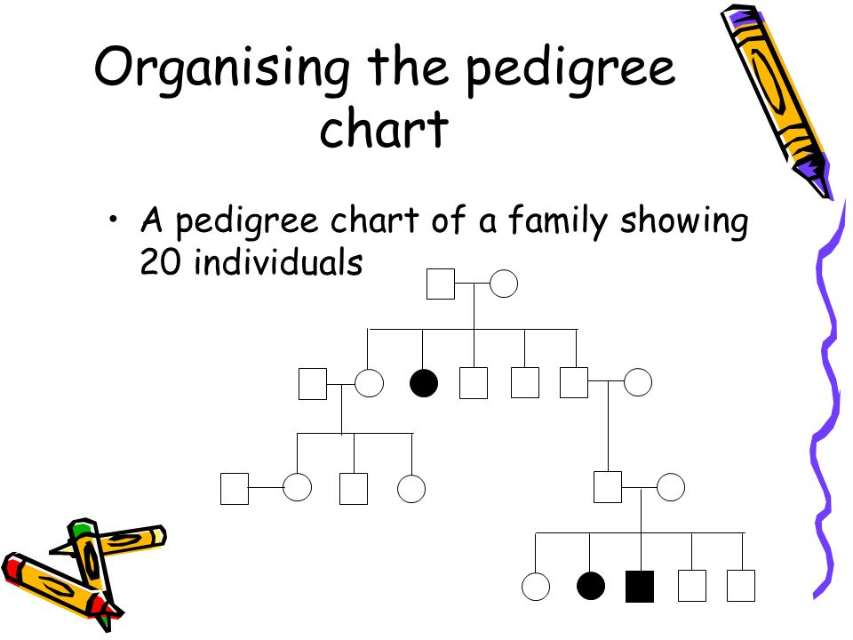 pedigree charts a family history of a genetic condition ppt download