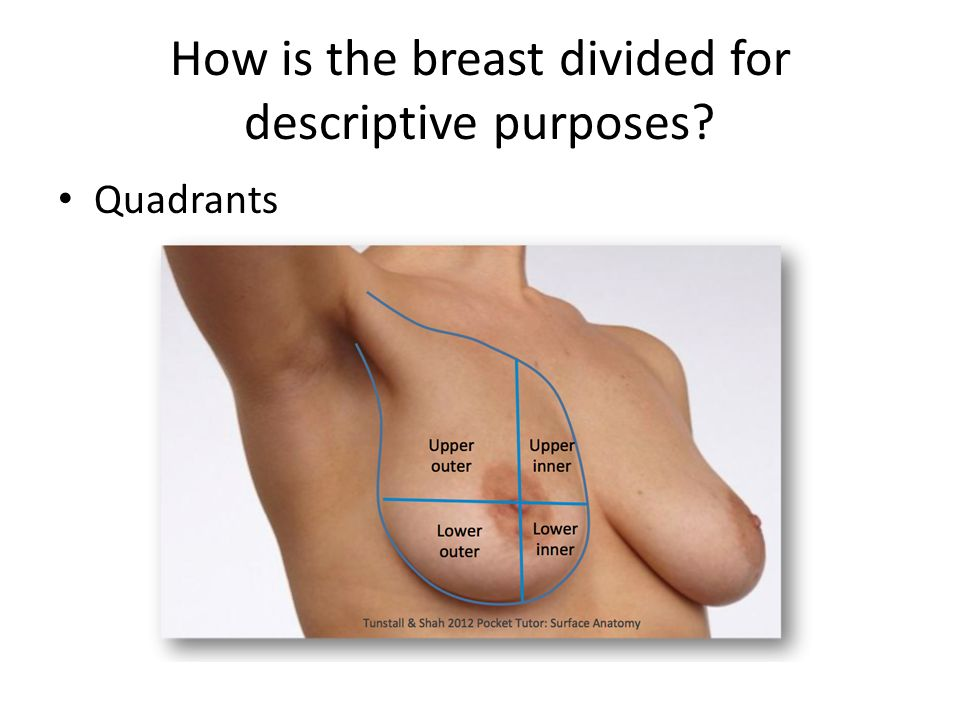 Breast anatomy. What area does the base of the breast cover? Extends ...