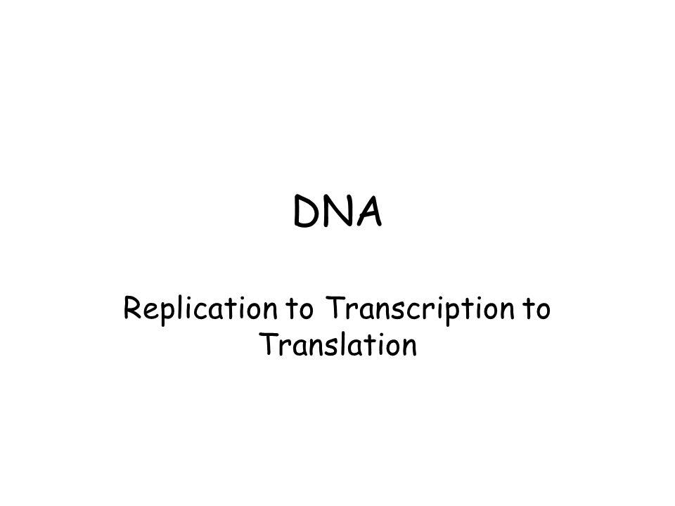 DNA Replication to Transcription to Translation. DNA Replication ...