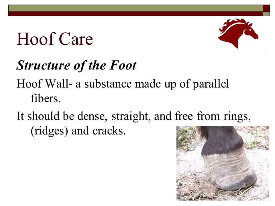 Equine Science & Technology Hoof Care. Structure of the Foot. - ppt ...