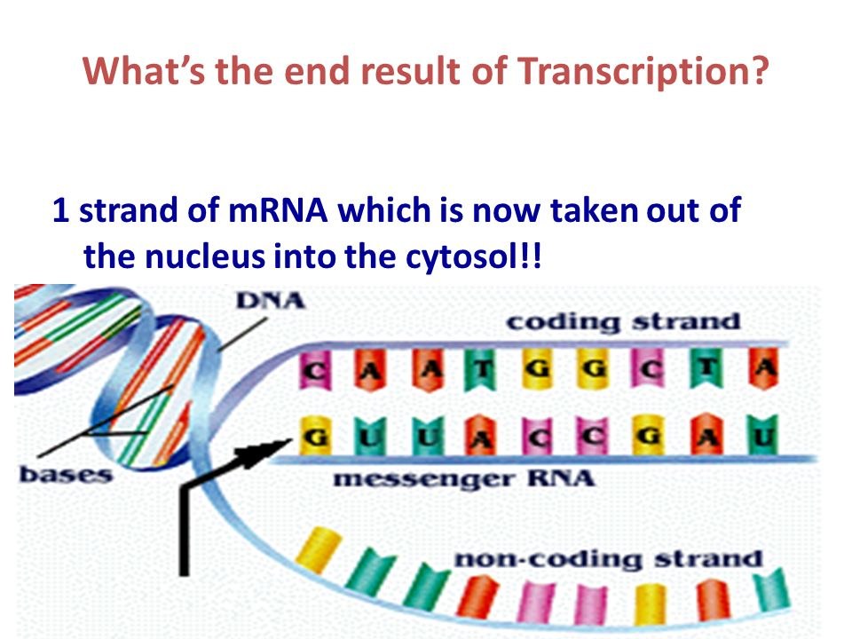 What's the end result of Transcription.