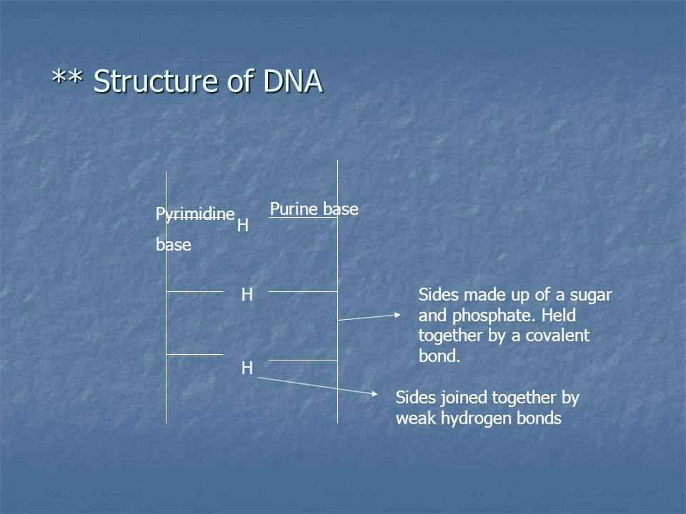 ** Structure of DNA ** Structure of DNA H H H Sides made up of a sugar and phosphate.