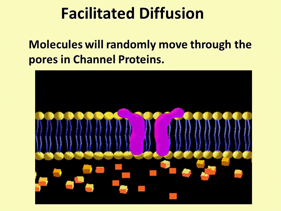 Facilitated Diffusion Molecules will randomly move through the pores in Channel Proteins.