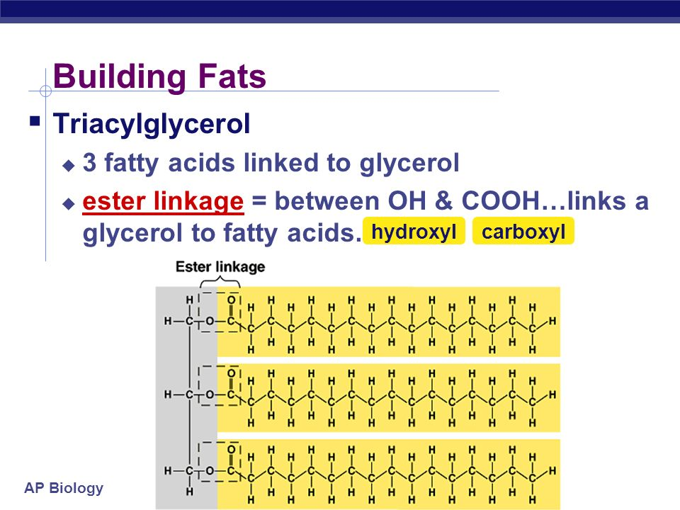 AP Biology Fats  Structure:  Fats, Oils and Waxes are made of a Glycerol molecule (3-Carbon alcohol) + fatty acid  fatty acid = long Hydrogen/Carbon tail with carboxyl (COOH) group head dehydration synthesis H2OH2O enzyme