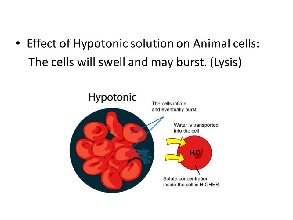 Effect of Hypotonic solution on Animal cells: The cells will swell and may burst. (Lysis)