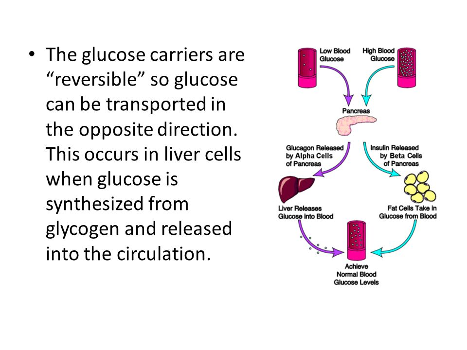 The glucose carriers are reversible so glucose can be transported in the opposite direction.