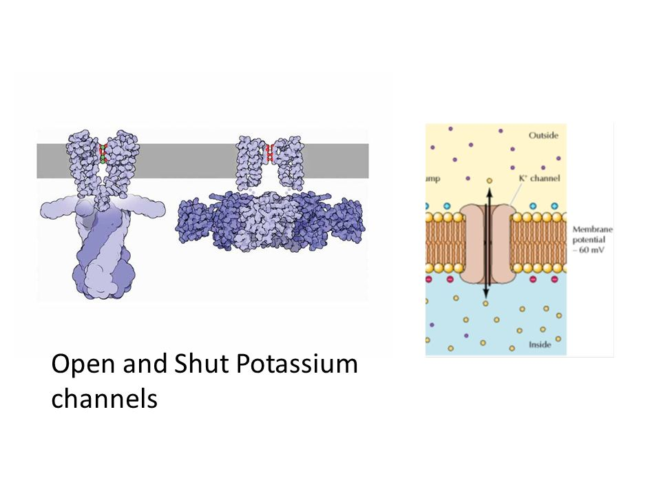Open and Shut Potassium channels