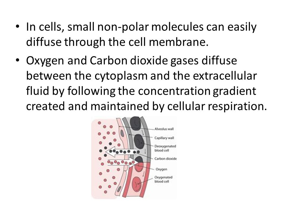 In cells, small non-polar molecules can easily diffuse through the cell membrane.