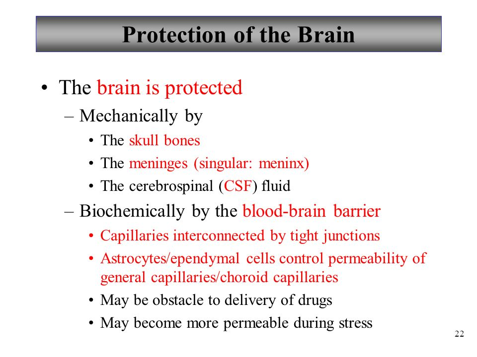 22 Protection of the Brain The brain is protected –Mechanically by The skull bones The meninges (singular: meninx) The cerebrospinal (CSF) fluid –Biochemically by the blood-brain barrier Capillaries interconnected by tight junctions Astrocytes/ependymal cells control permeability of general capillaries/choroid capillaries May be obstacle to delivery of drugs May become more permeable during stress