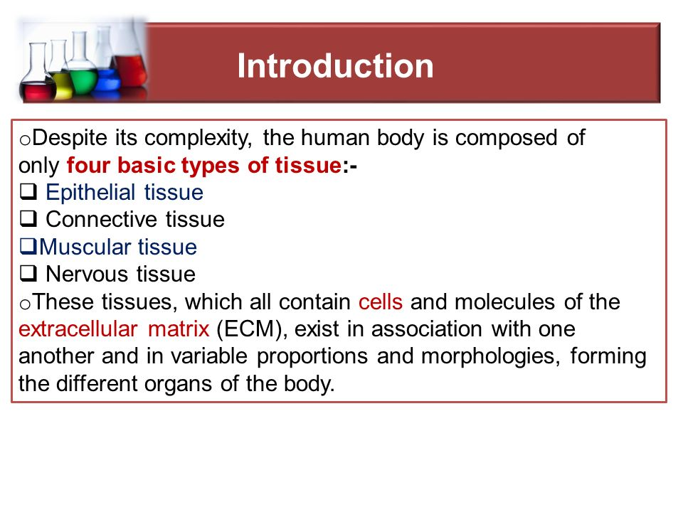 four basic types of tissue in the human body
