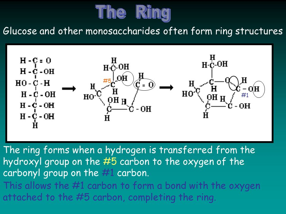 Glucose and other monosaccharides often form ring structures The ring forms when a hydrogen is transferred from the hydroxyl group on the #5 carbon to the oxygen of the carbonyl group on the #1 carbon.