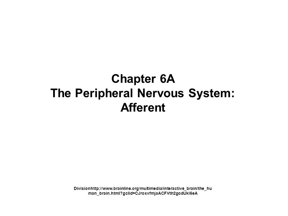 Chapter 6a The Peripheral Nervous System Afferent Divisionhttp