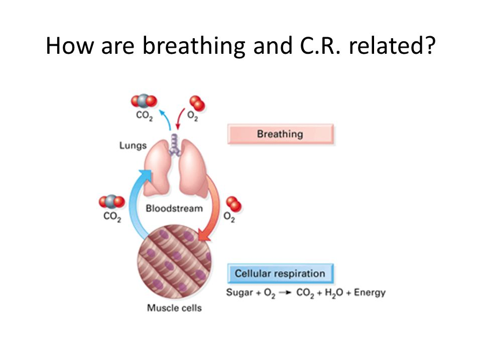 How are breathing and C R  related?  How is energy created