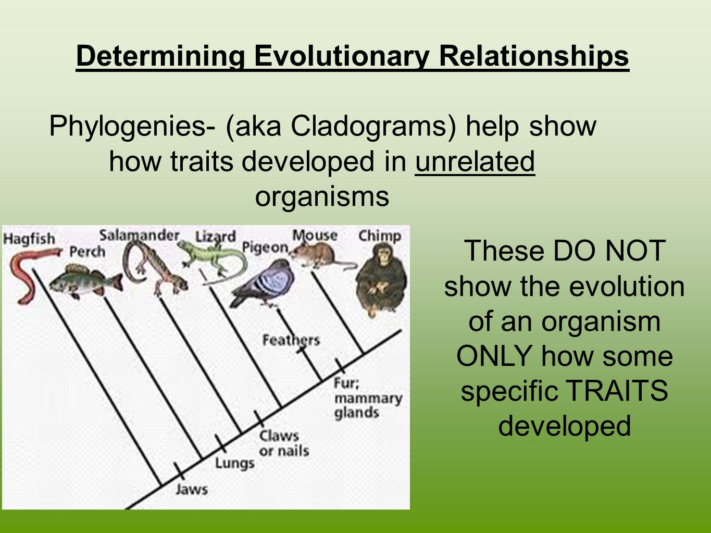 define evolutionary relationships