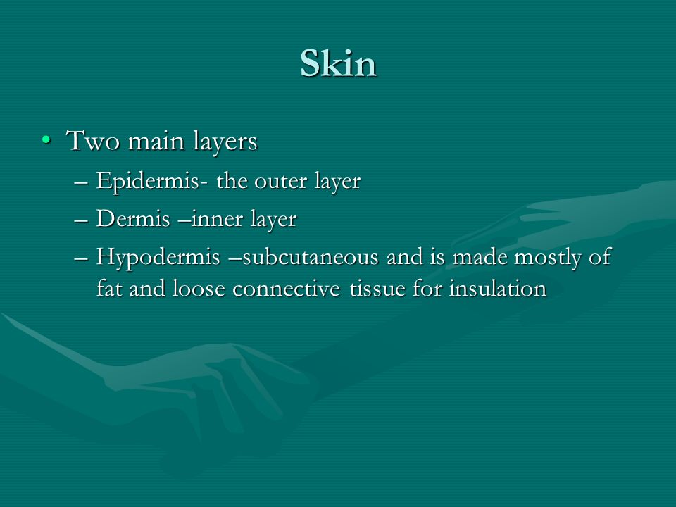 Skin Two main layersTwo main layers –Epidermis- the outer layer –Dermis –inner layer –Hypodermis –subcutaneous and is made mostly of fat and loose connective tissue for insulation