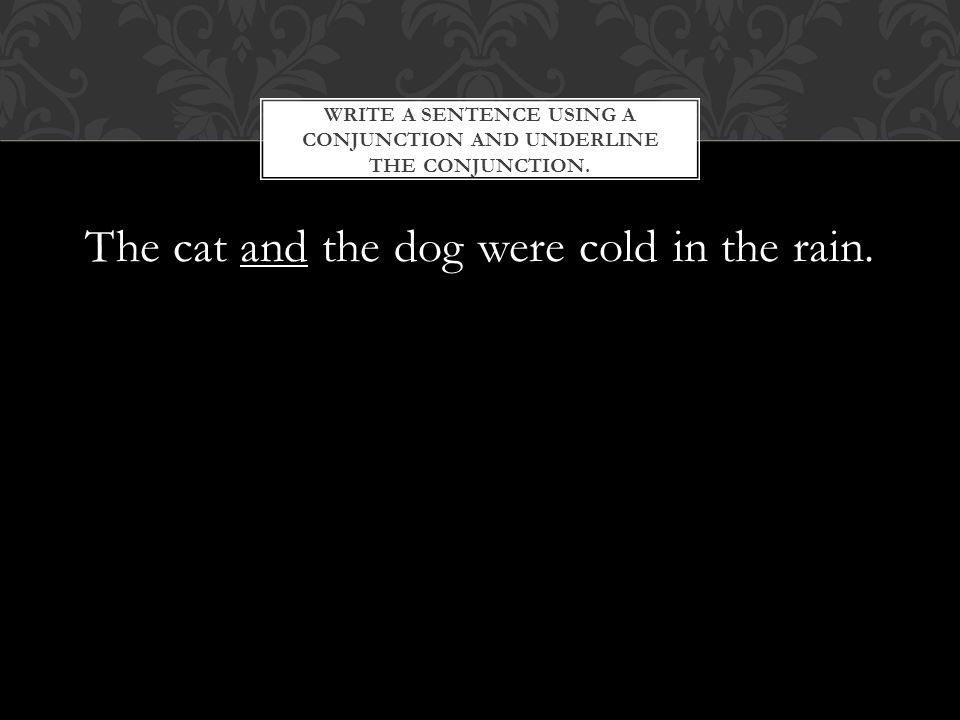 The cat and the dog were cold in the rain.