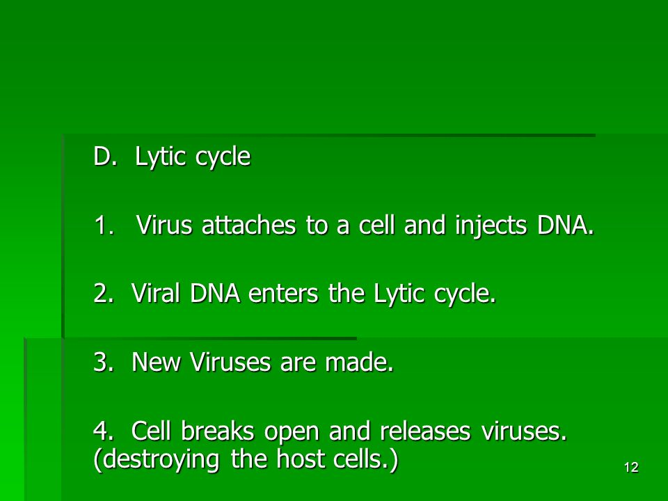12 D. Lytic cycle 1. Virus attaches to a cell and injects DNA.