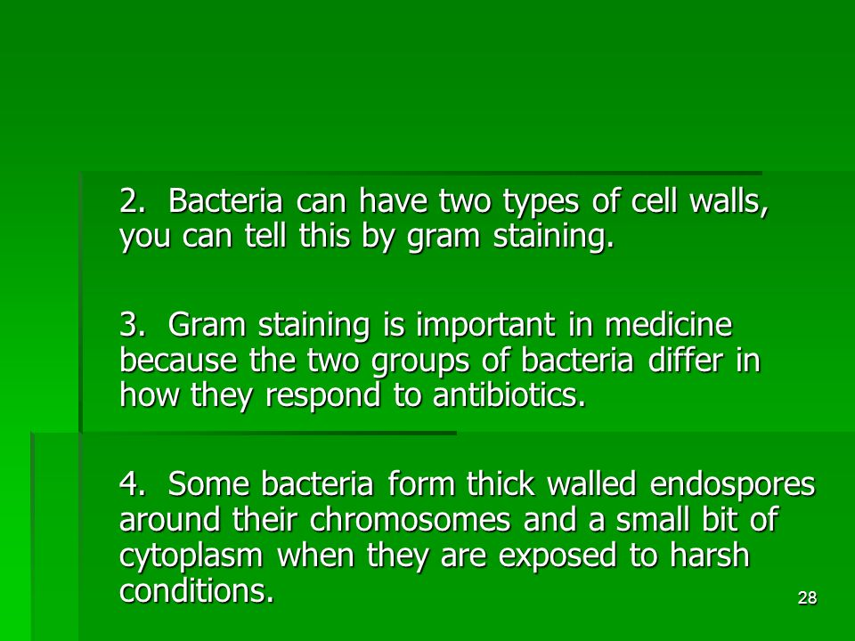 28 2. Bacteria can have two types of cell walls, you can tell this by gram staining.