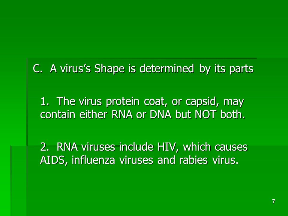 7 C. A virus's Shape is determined by its parts C.