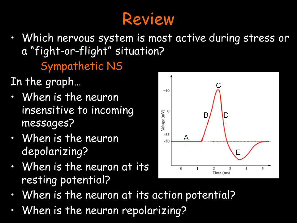 Review Which nervous system is most active during stress or a fight-or-flight situation.