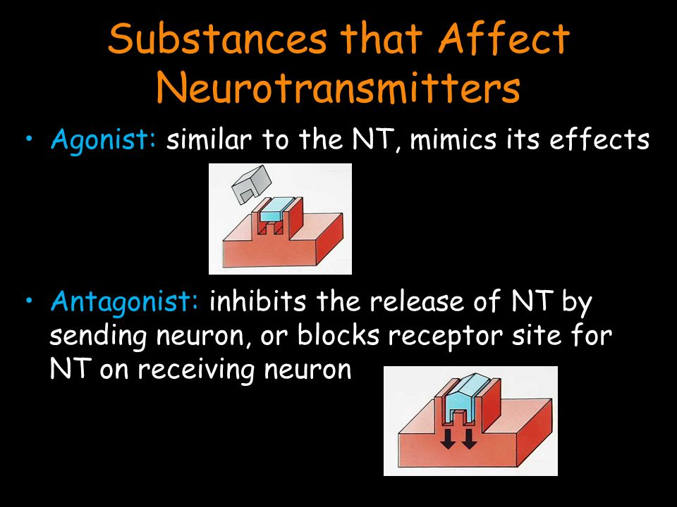 Substances that Affect Neurotransmitters Agonist: similar to the NT, mimics its effects Antagonist: inhibits the release of NT by sending neuron, or blocks receptor site for NT on receiving neuron