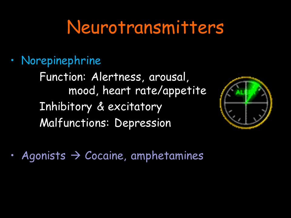 Norepinephrine Function: Alertness, arousal, mood, heart rate/appetite Inhibitory & excitatory Malfunctions: Depression Agonists  Cocaine, amphetamines Neurotransmitters