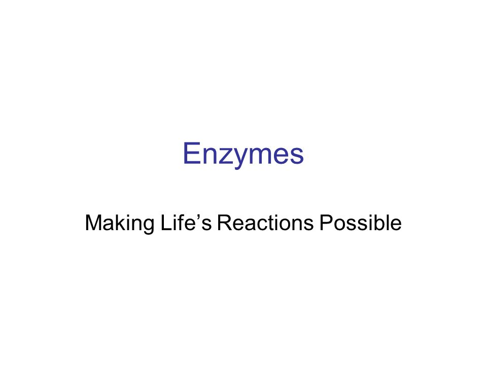 Enzymes Making Life's Reactions Possible