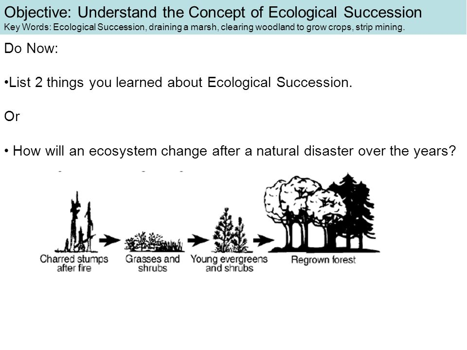 besides  likewise How Ecosystems Change   Ecological Succession   Wel e to Mrs as well Natural   Disturbances that Affect an Ecosystem   Video furthermore  furthermore Ecosystems   4th Grade Reading  prehension Worksheet together with Succession hi  TtijkL c Lct   WL S U together with Ecological Succession Worksheet   Teachers Pay Teachers further  moreover Lesson  1 What is an ecosystem moreover  moreover Chapter 3 ‐ Section 1 ‐‐ How Ecosystems Change A  Ecological besides  besides 5th Grade Ch  6 Lesson 1 How do Ecosystems Change additionally Ecological Succession Worksheet pond KEY together with . on how ecosystems change worksheet answers