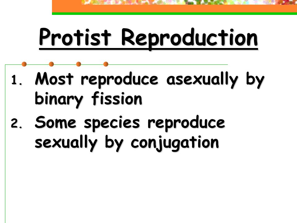 Which protist reproduces asexually by binary fission and conjugation