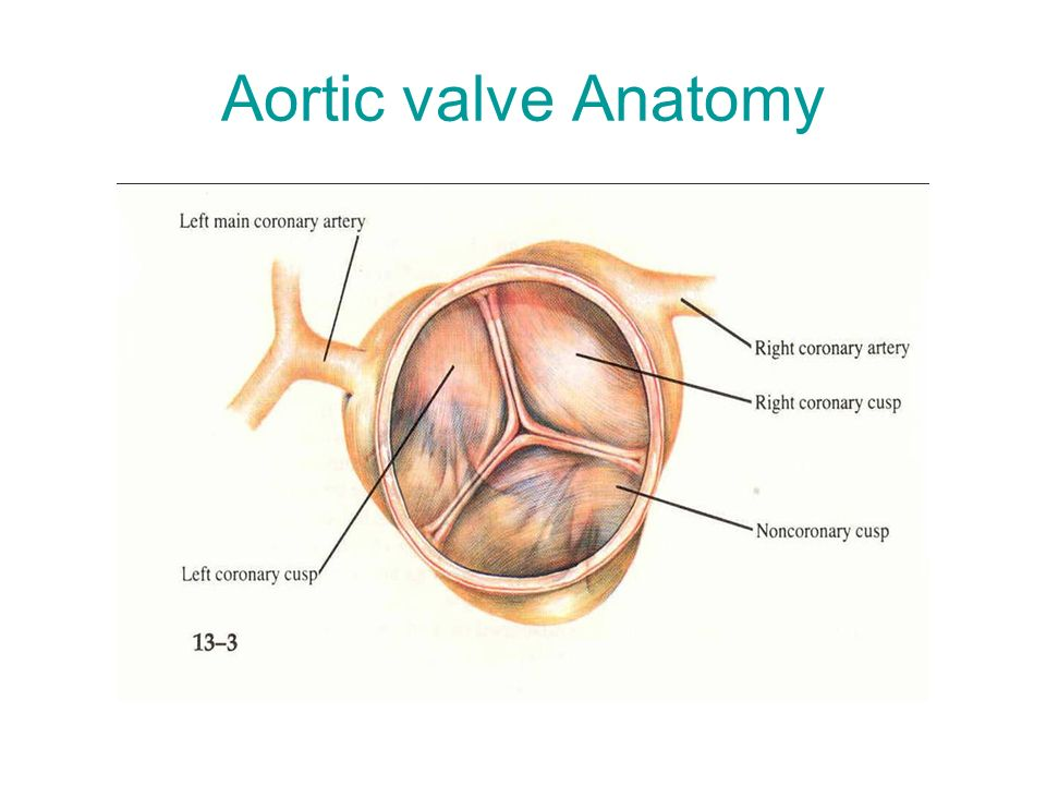 Valve Surgery V.Rohn. Valve Surgery History before the era of ECC ...