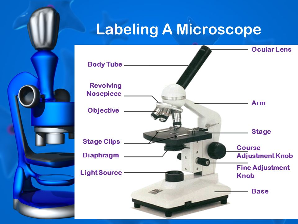 All About Scopes Labeling A Microscope Body Tube Revolving