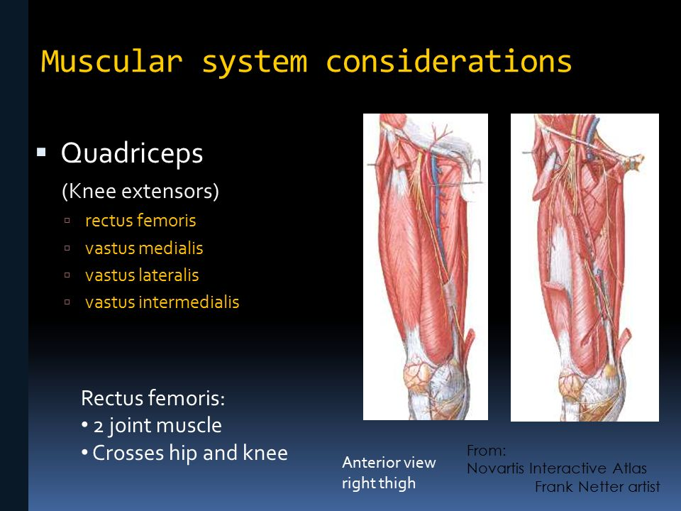 Skeletal And Muscular Considerations In Movement Knee Ankle Foot