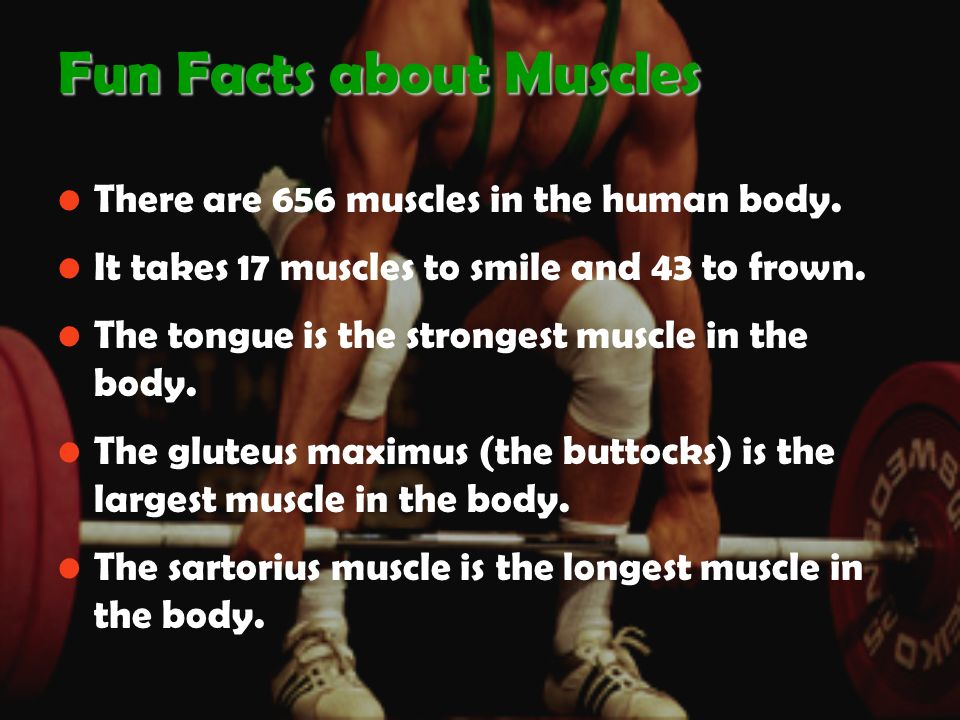 Chapter 7 Chapter 7 The Muscular System. Function of Muscles ...