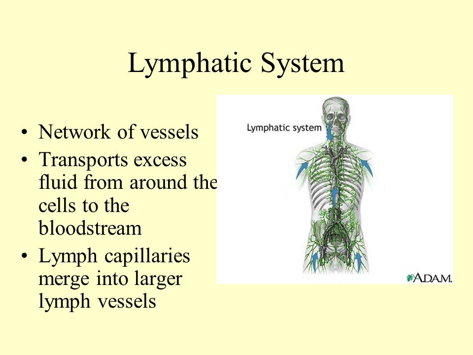 Lymphatic System Anatomy and Physiology