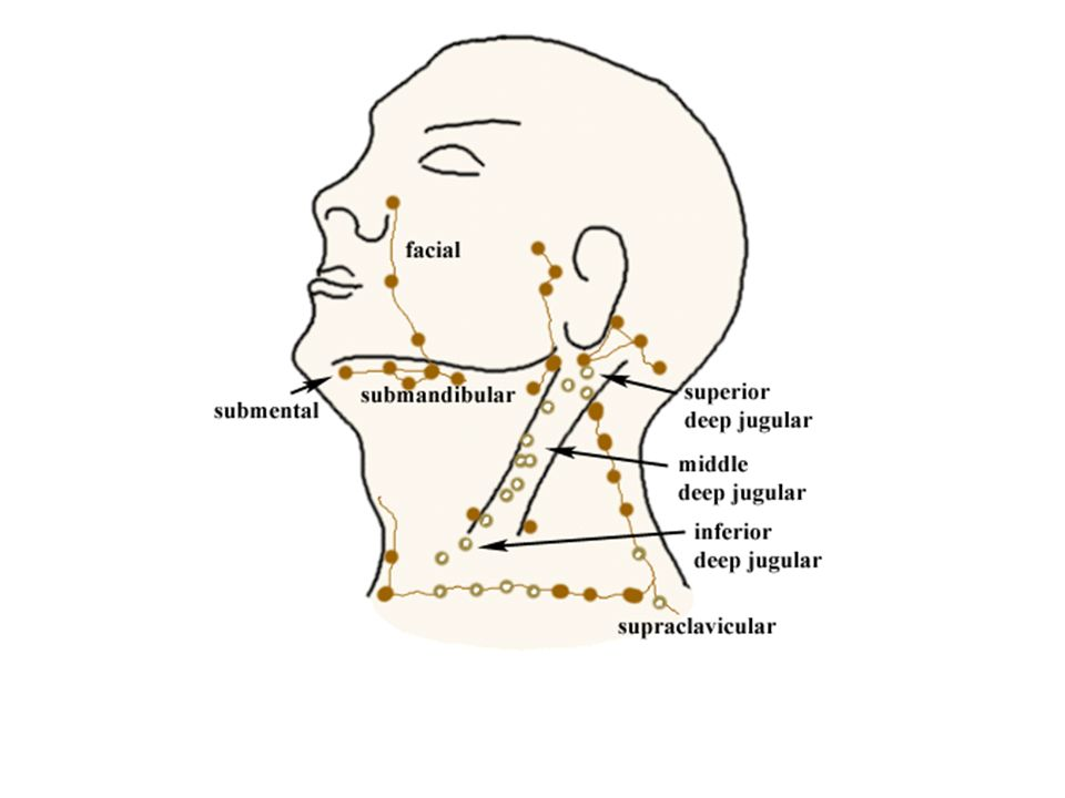 Lymphatic System Kamal Salih