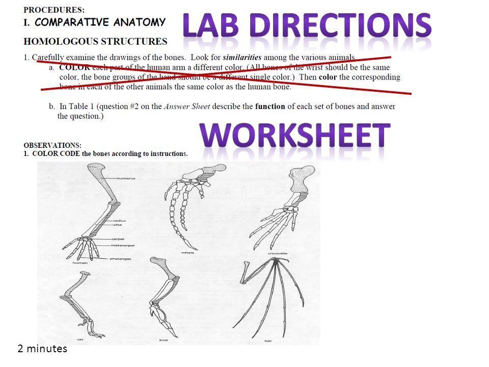 anatomy evolution worksheet Sc912l151 explain the scientific theory of evolution is supported by the fossil record, comparative anatomy, comparative embryology, biogeography, molecular biology, and observed evolutionary change.