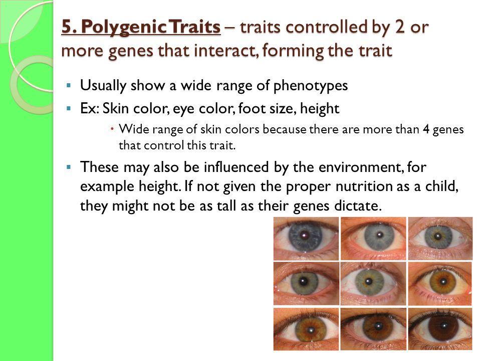 30 5 Polygenic Traits