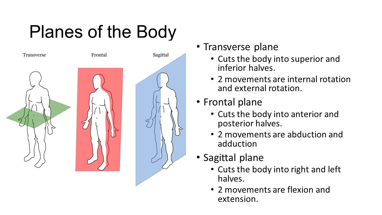 Body Organization Review. Planes of the Body Transverse plane Cuts ...