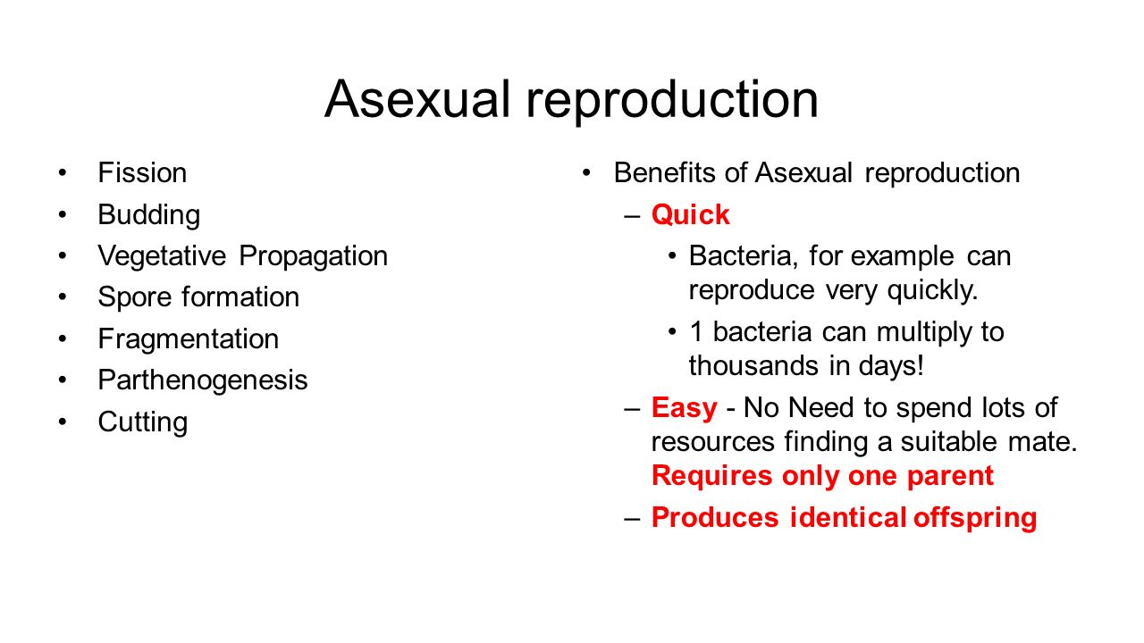 Examples of vegetative propagation asexual reproduction in bacteria