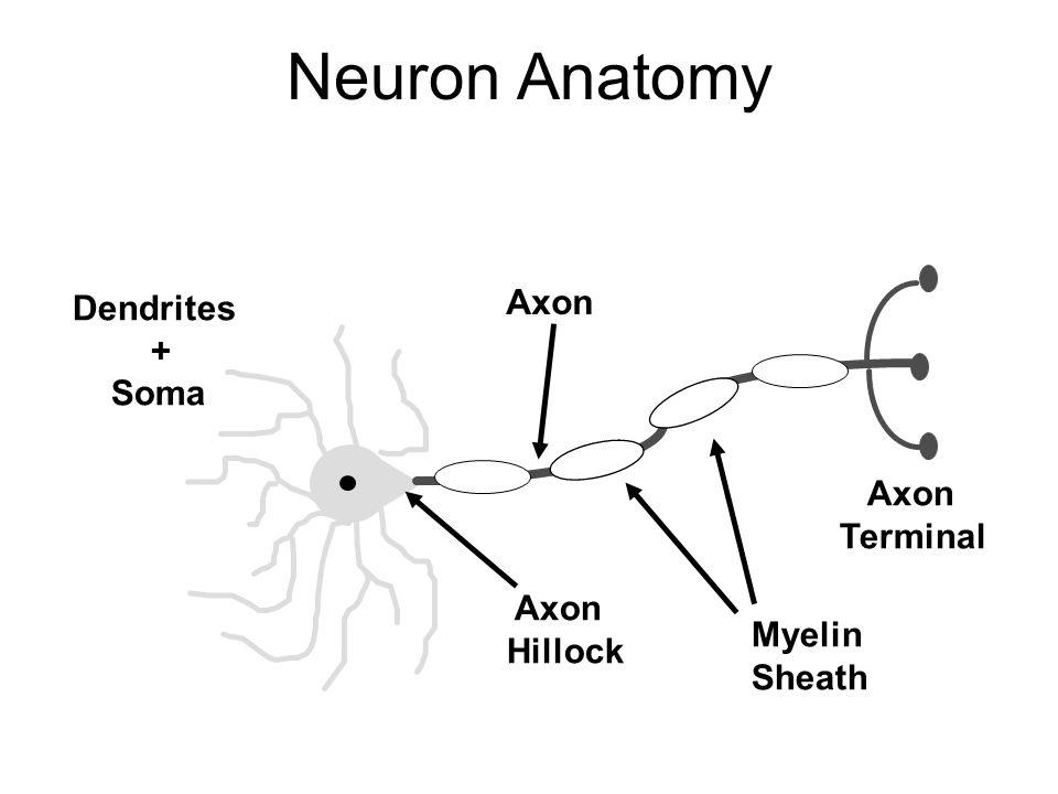 Neurons Neuroglia Lesson 3 Basic Cell Biology N Eukaryotic Cells
