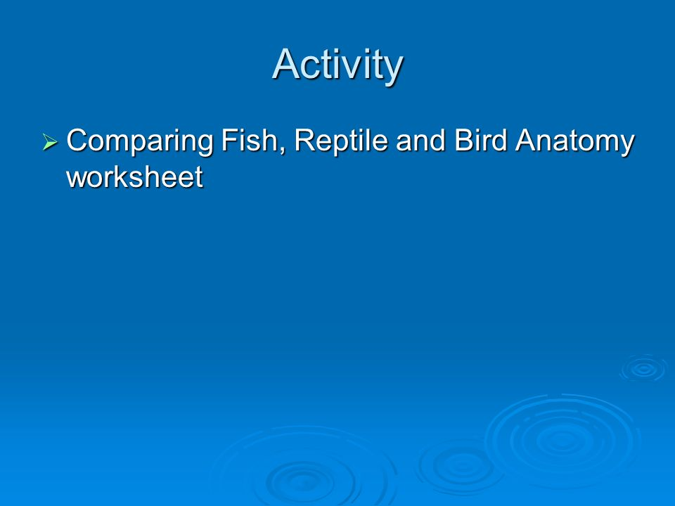 Fish! Common Types Animal Science Level 1. Key Learning: Fish ...