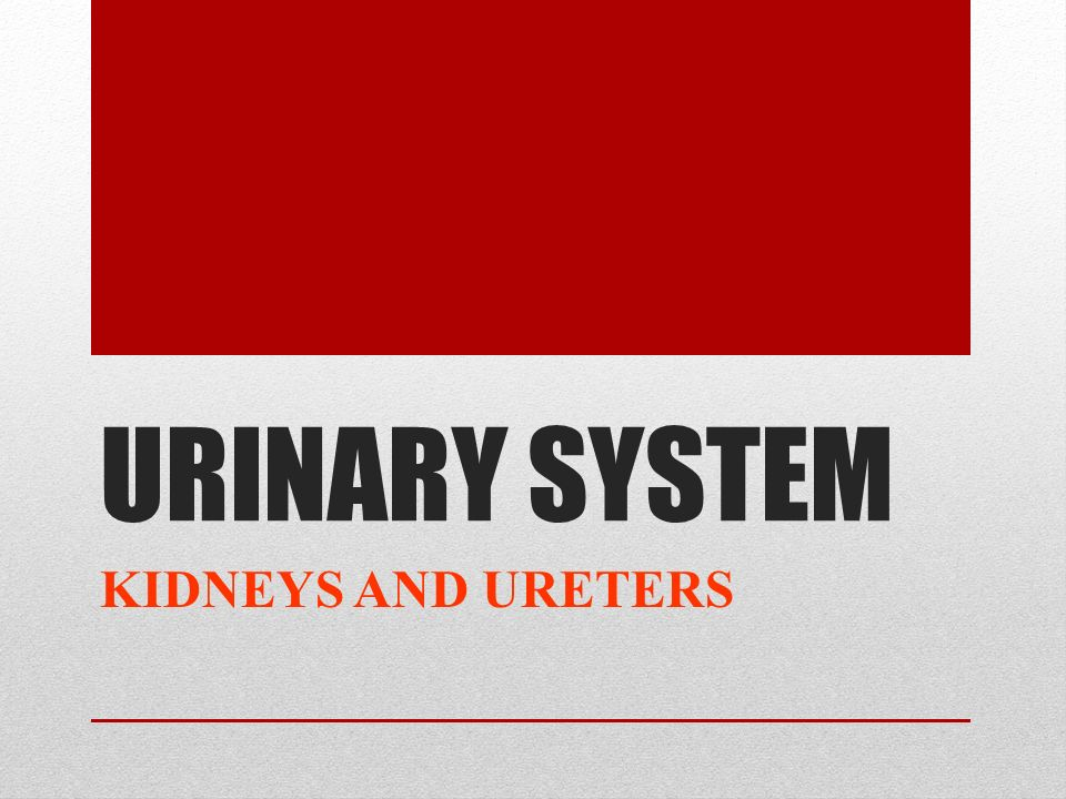 URINARY SYSTEM KIDNEYS AND URETERS