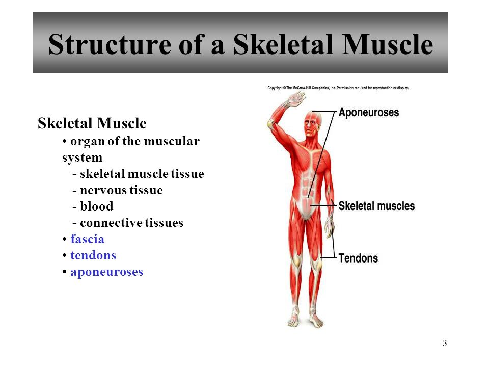 1 PowerPoint Lecture Outlines to accompany Hole\'s Human Anatomy and ...