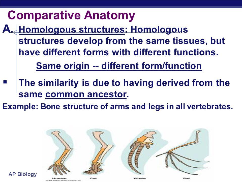 Ap Biology Chapter 153 Evidence Of Evolution Dodo Bird Ppt Download