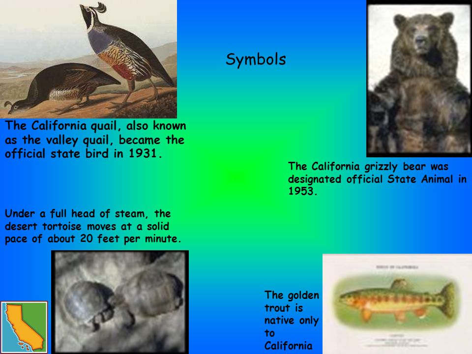 By Kevin Symbols Famous People Landmarks Sources Facts Why Would You