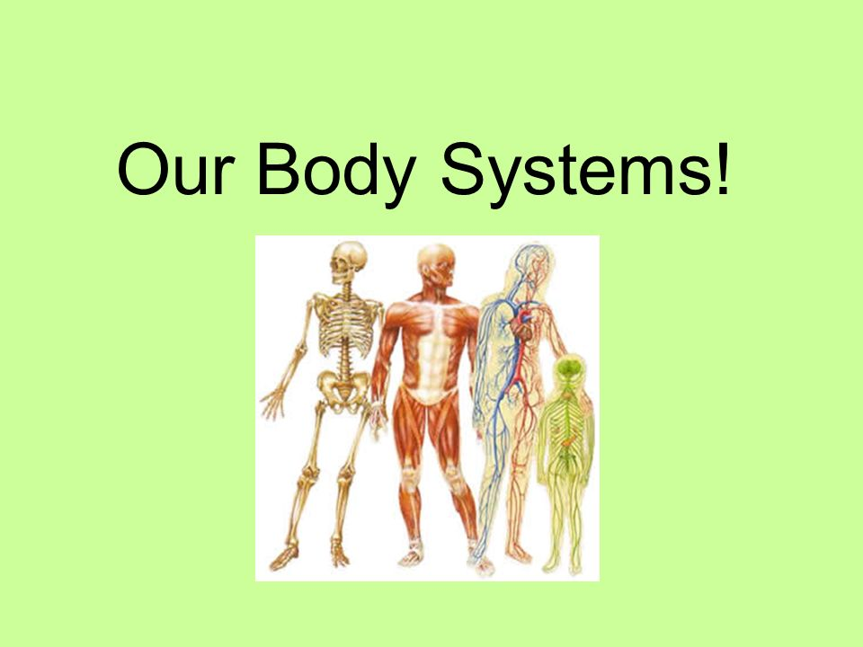 Our Body Systems!. Body Systems What are they? You have 11 body ...