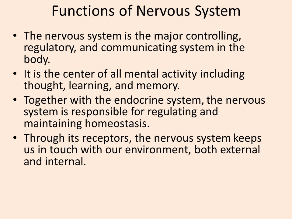 The nervous system is the major controlling renault master 2008 kaufen